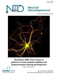 View PDF - Neural Development