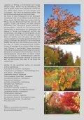 sakura Herbst 2009 als pdf - Langsdorff - Seite 2