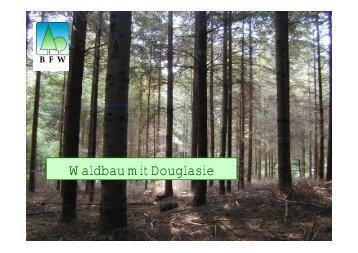 Waldbau mit Douglasie - BFW