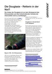 Die Douglasie - ein Nadelbaum als Retterin in der Not? - Greenpeace