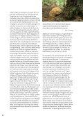 douglasie – eine eingebürgerte baumart mit zukunft - Landesforsten ... - Seite 3