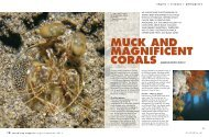 MUCK AND MAGNIFICENT CORALS - Dive The Blue . net