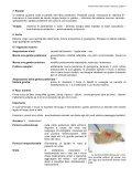 PAZIENTI RICCI NELLO STUDIO VETERINARIO - Page 7