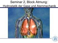 Seminar 2, Block Atmung: