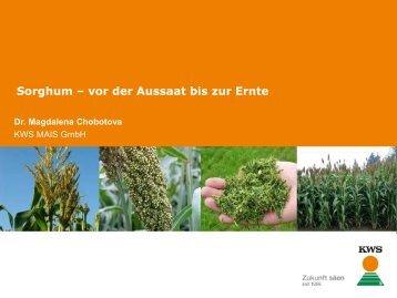 Sorghum – vor der Aussaat bis zur Ernte - cultivent