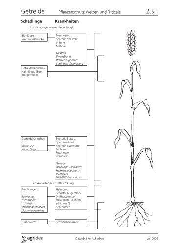 Pflanzenschutz Weizen und Triticale - AgriGate AG