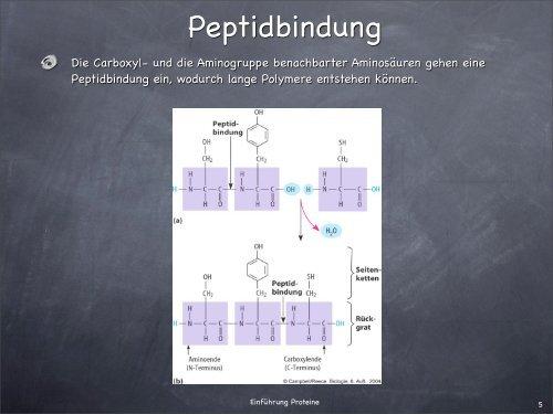 PowerPoint-Präsentation - Proteine. - Israng.ch