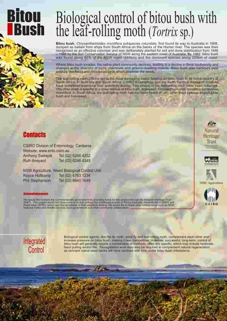Biological control of bitou bush with the leaf ... - Weeds Australia