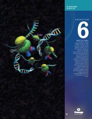 Chapter 6, Ribosome Display, In Vitro Expression Guide ... - Promega