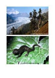 Die Alpen - WWF Schweiz