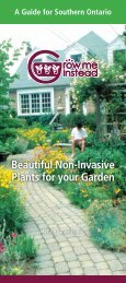 Beautiful Non-Invasive Plants for your Garden