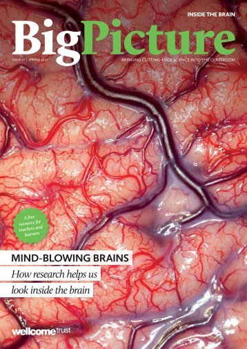 MIND-BLOWING BRAINS How research helps us look inside the brain