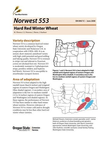Norwest 553 Hard Red Winter Wheat - Oregon State University ...