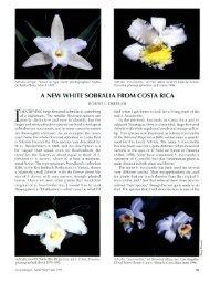 A NEW WHITE SOBRALIA FROM COSTA RICA - Epidendra