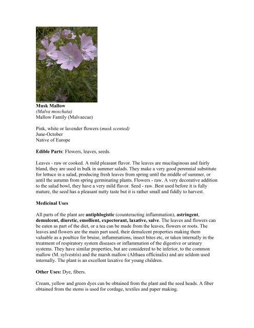50 Huperzia Shining Club Moss Spores SHADE GROUNDCOVER
