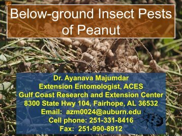 Below-ground Insect Pests of Peanuts