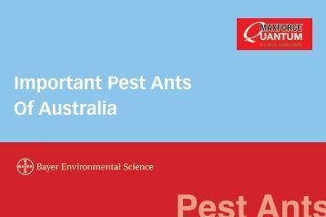 Important Pest Ants Of Australia