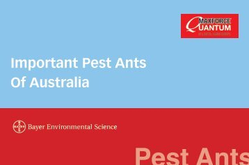 Important Pest Ants Of Australia