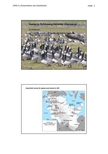 Geese in Schleswig-Holstein (Germany) - Wadden Sea Forum