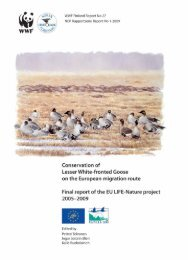 Conservation of Lesser White-fronted Goose on the - WWF