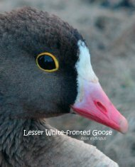 Lesser White-fronted Goose - European Commission