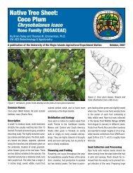 Native Tree Sheet: Coco Plum - University of the Virgin Islands