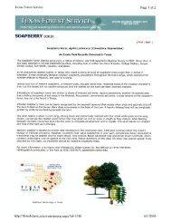 Soapberry Borer Informational Sheet