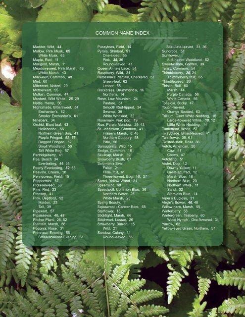 69 - Keweenaw Wildflowers