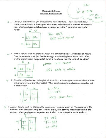 Monohybrid Cross Problems 2 Worksheet with Answers and Worksheets 46 besides Monohybrid Cross Worksheet – Fronteirastral besides  besides Monohybrid Cross Worksheet Answers The best worksheets image additionally  moreover Monohybrid Cross Worksheet Answer Key Pdf besides worksheets on monohybrid cross   Google Search   Clroom likewise 4 Mendelian Ge ics Worksheet Answer Key   FabTemplatez furthermore Pun t Square Worksheet 1 Answer Key Elegant In Plete and in addition monohybrid cross worksheet need an introductory ge ics worksheet as well Periodic Trends Worksheet Answers Pogil P90x Worksheets Monohybrid also Ge ics Practice Problems Worksheet Answers Unique Monohybrid Cross also Dihybrid Crosses Worksheet How Many Traits Are Involved In A in addition Monohybrid Problems Worksheet   Kidz Activities likewise Monohybrid Worksheet additionally Monohybrid Cross Worksheet   Homedressage. on monohybrid cross worksheet answer key