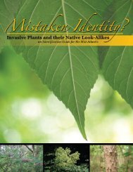 Mistaken Identity? Invasive Plants - New York Botanical Garden