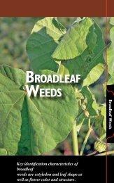 Broadleaf Weeds - The Iowa Soybean Association