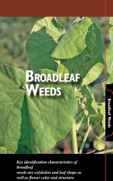 Broadleaf Weeds - The Iowa Soybean Association
