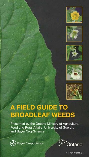 A FIELD GUIDE TO BROADLEAF WEEDS - Bayer CropScience