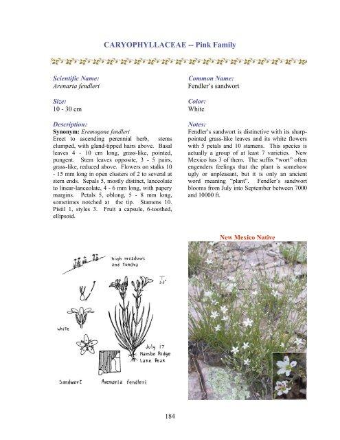 Lambert's locoweed - New Mexico Flores