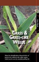grass & grass-lIke Weeds - The Iowa Soybean Association