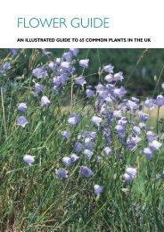 Wild Flower Guide from PlantLife - Lancashire Wildlife
