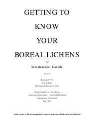 getting to know your boreal lichens - Saskatchewan Conservation ...