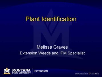 Plant Identification Guide - Center for Invasive Plant Management
