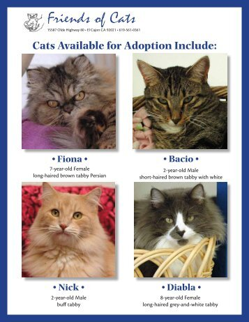 View this month's Featured Adoptable Cats! - Friends of Cats