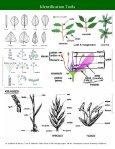 Alberta Invasive Plant Identification Guide - Page 6