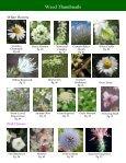 Alberta Invasive Plant Identification Guide - Page 7