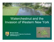 Waterchestnut and the Invasion of Western New York