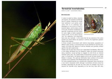 Terrestrial invertebrates - Udine Cultura