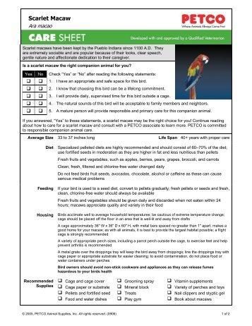 Scarlet Macaw - Petco.com