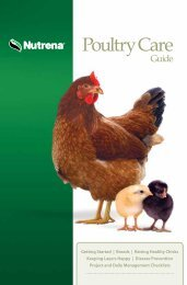 Download your copy of the Nutrena Poultry Care