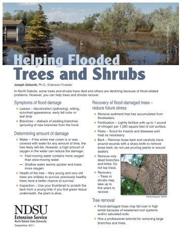 Helping Flooded Trees and Shrubs - NDSU Agriculture - North ...