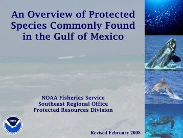 Protected Species in the Gulf of Mexico - NMFS' Southeast Region ...