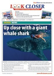 Up close with a giant whale shark - First News
