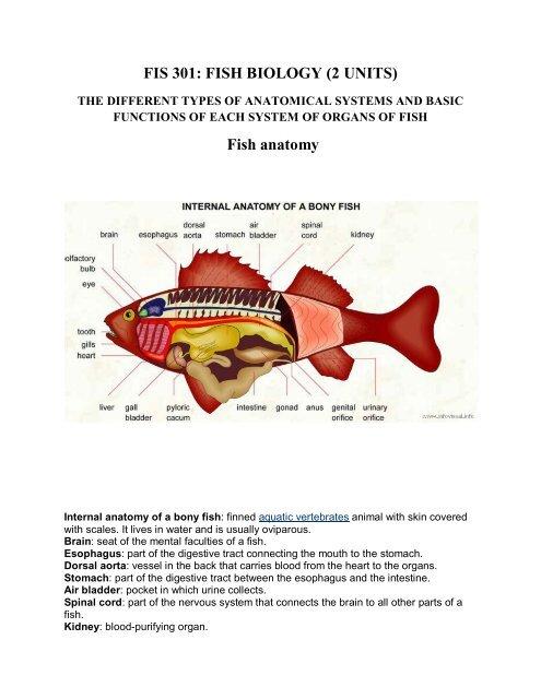 Fis 301 Fish Biology 2 Units Fish Anatomy