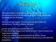 Florida Keys Fish Identification Study Guide